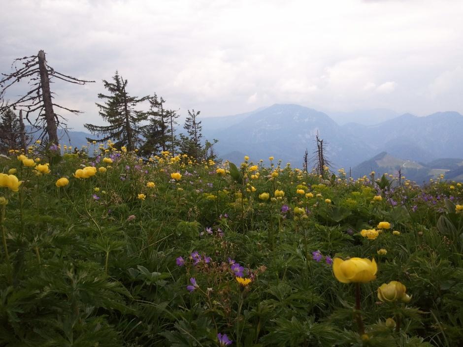 Blumenwiese in Gipfelnähe
