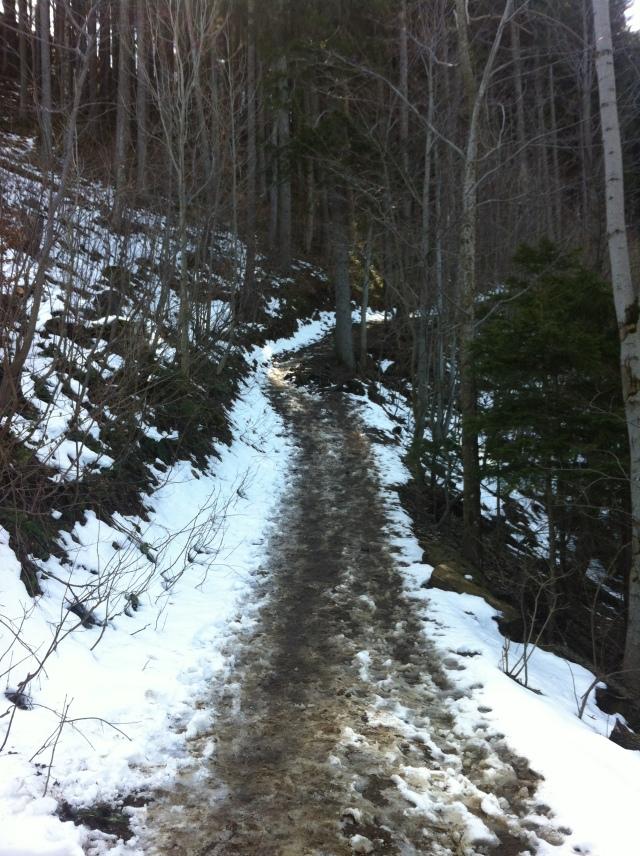Waldweg mit Schneeresten