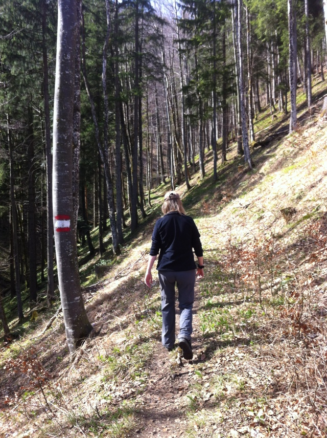Waldsteig zum Sonnkogel