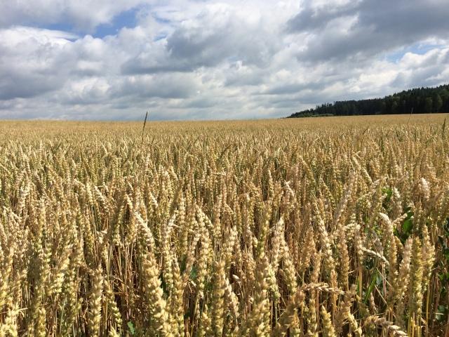 Felder kurz nach Allhut