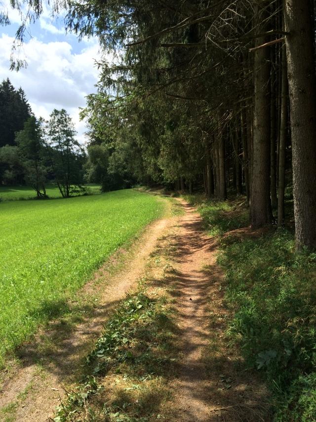 Idyllischer Wegverlauf am Waldrand